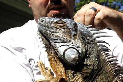 Midgard Serpents Reptile Rescue Photos